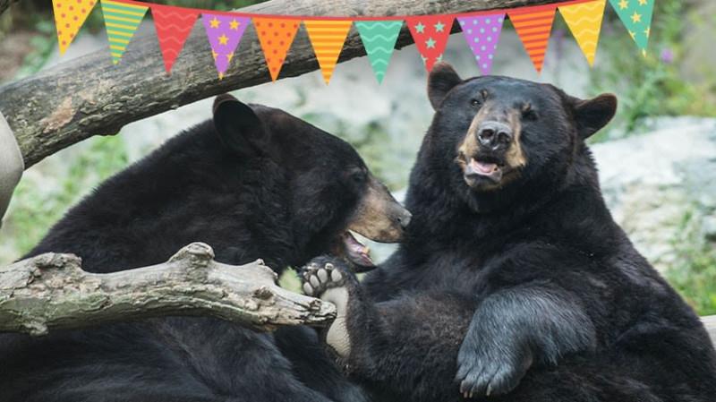 Celebrating Bears